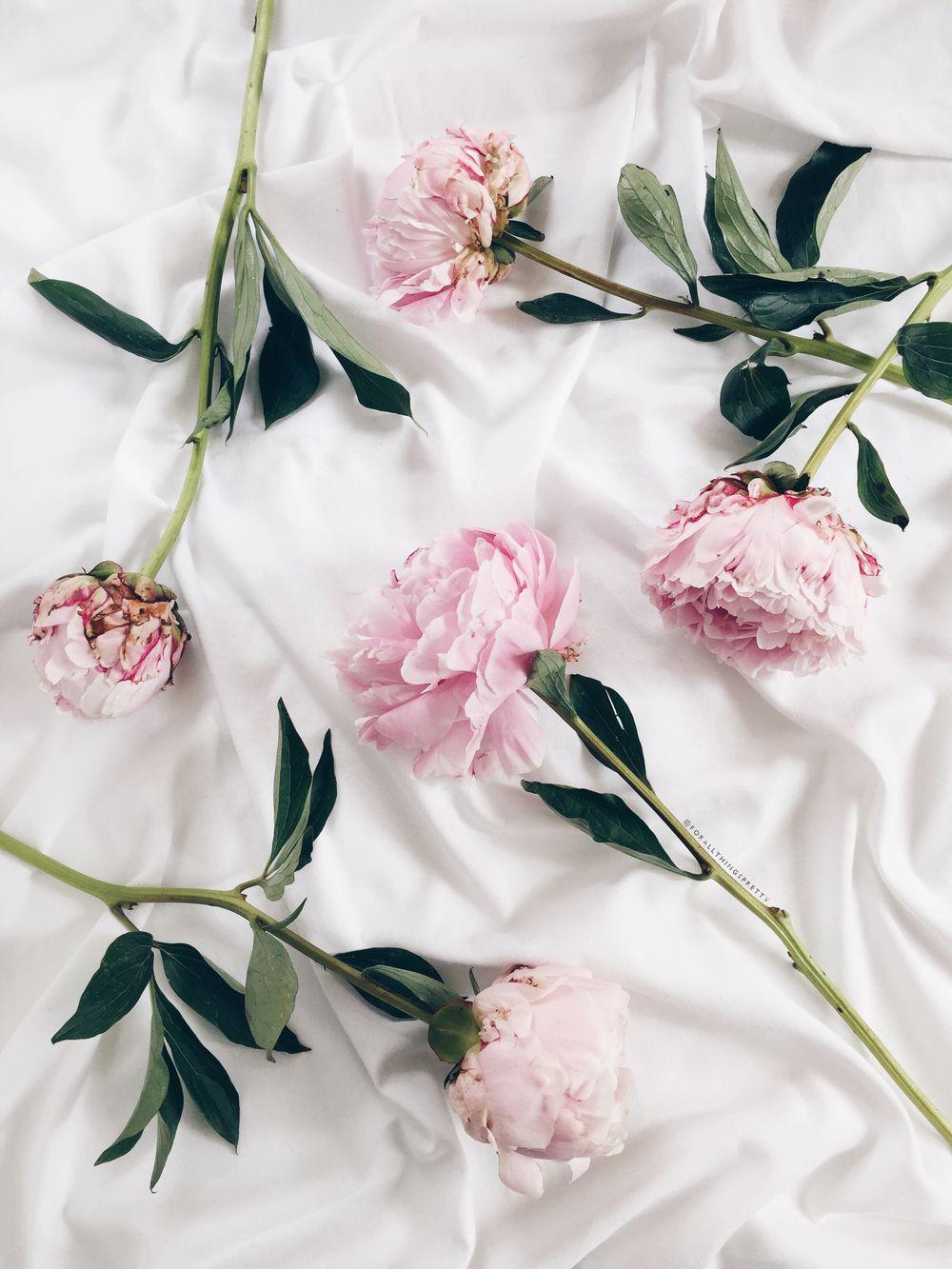 Dress Up Your Tech Peony Wallpaper Peony Wallpaper Flower Wallpaper Ipad Wallpaper Cute flower wallpaper for ipad