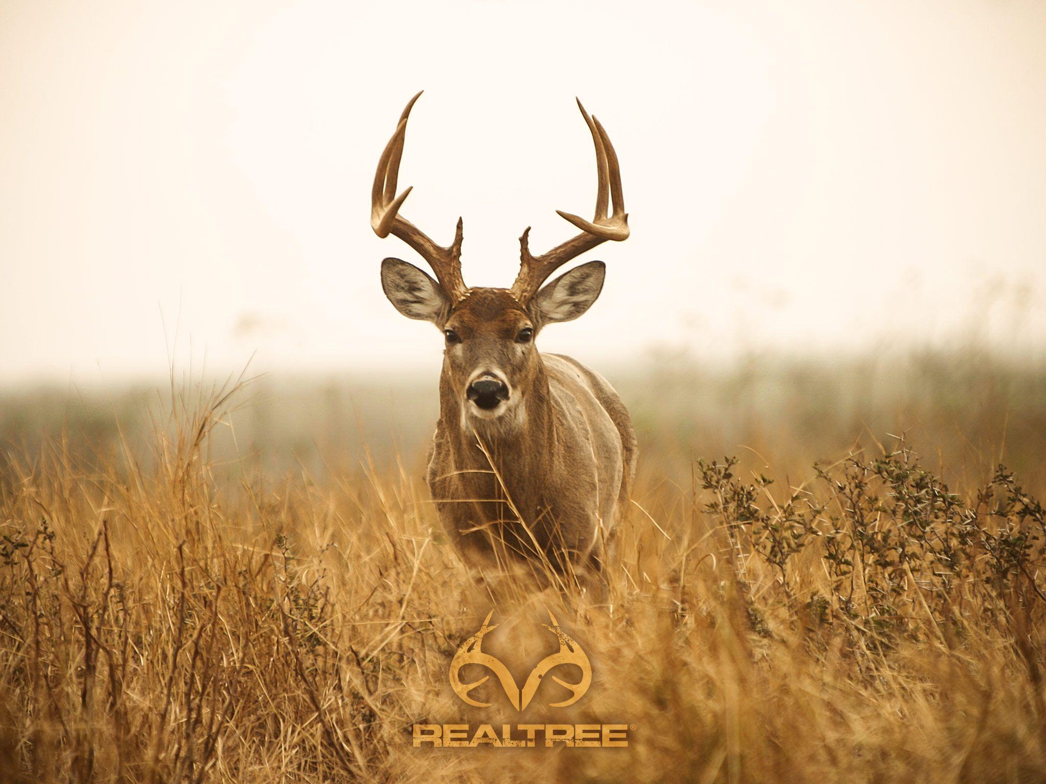 Top Whitetail Deer Hd Wallpapers Wallpapers | Shared in 2019 | Deer wallpaper, Hunting wallpaper ...