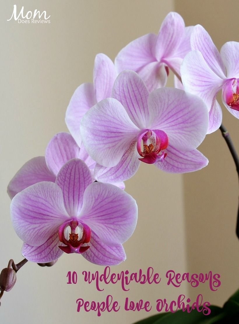 10 Undeniable Reasons People Love Orchids Orchids 10 Things Household Plants
