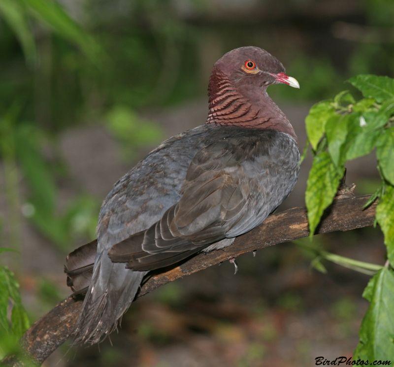 Фото птиц живущих в польше