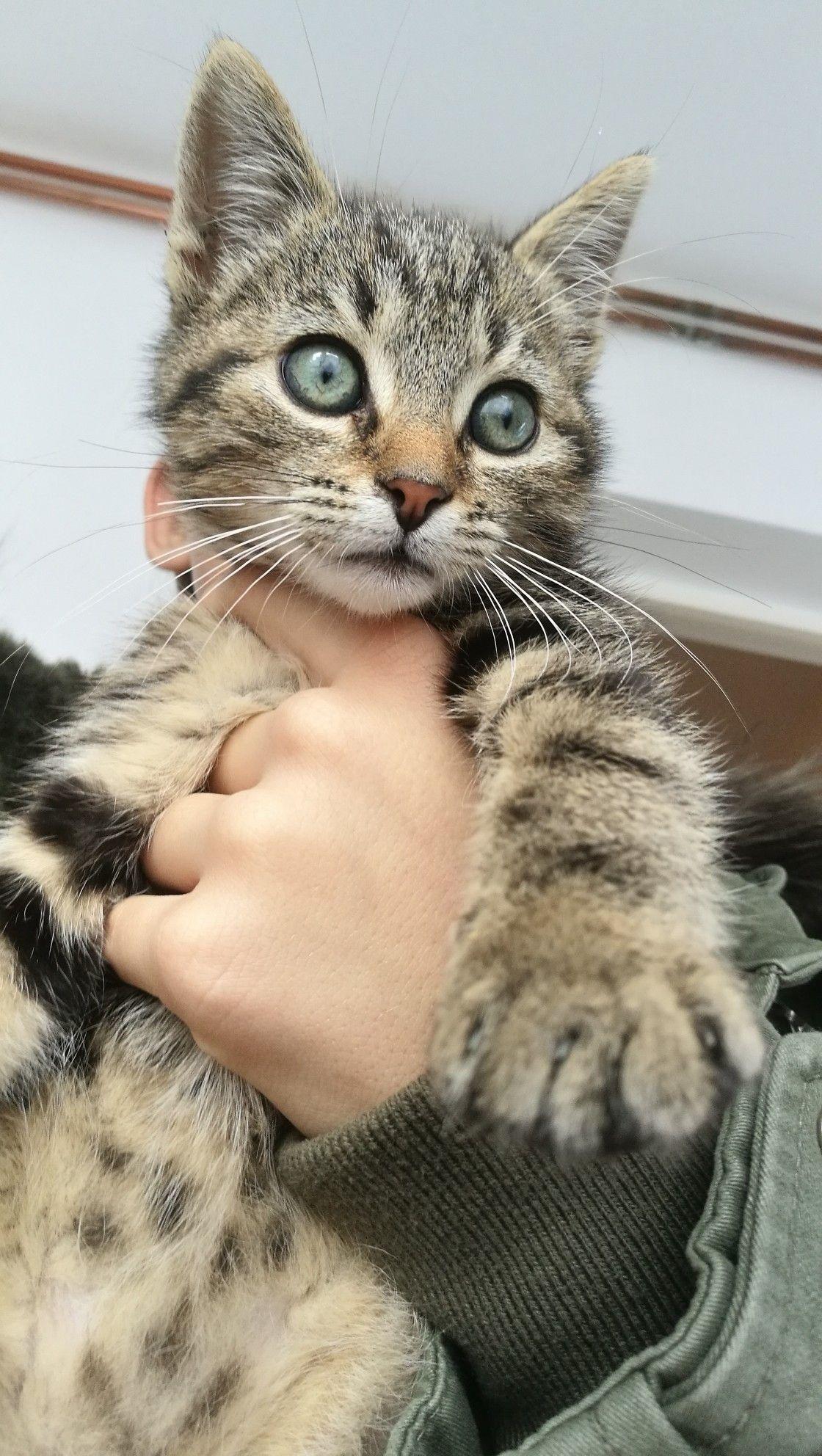 Pin By Lluketicc On Kittens Kittens Cats Animals