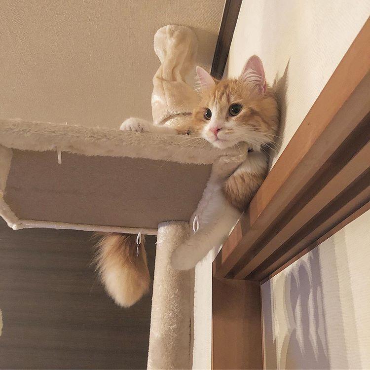 キキさんはInstagramを利用しています「猫ねこcat子猫