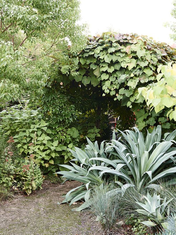 Garden with texture garden for ross and ann-maree eckersley, surrey on planting a garden, drought tolerant landscape design, modern planting design,