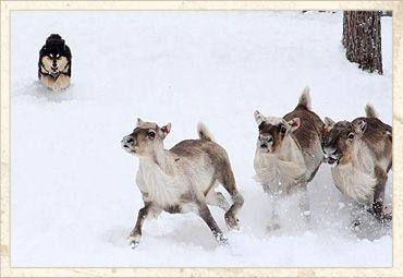 Iki-Wanhan kennel - Nauravia, laulavia lapinkoiria rakkaudella