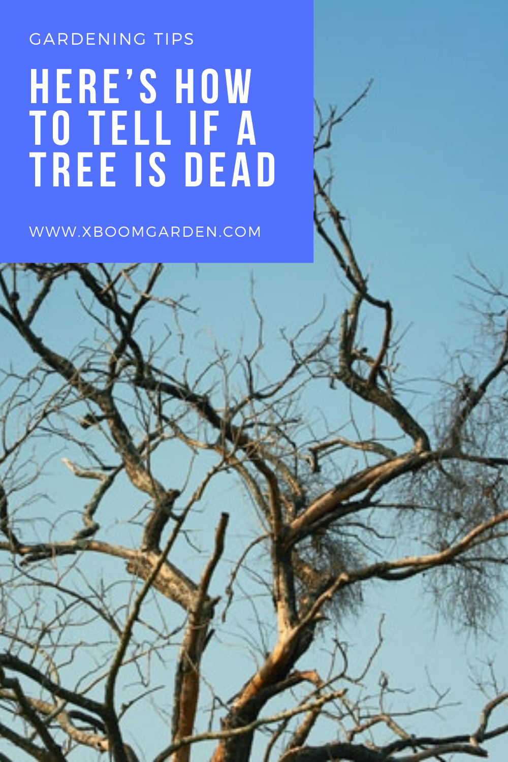 Here S How To Tell If A Tree Is Dead Gardening Tips To Tell Yard Work