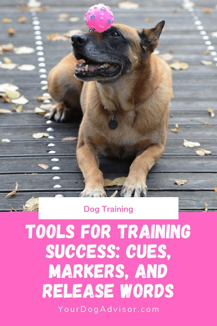Cues, Markers, Release Words Essential Tools for Training