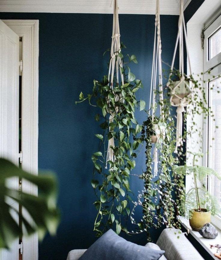macrame plant hangers  living room plants living room