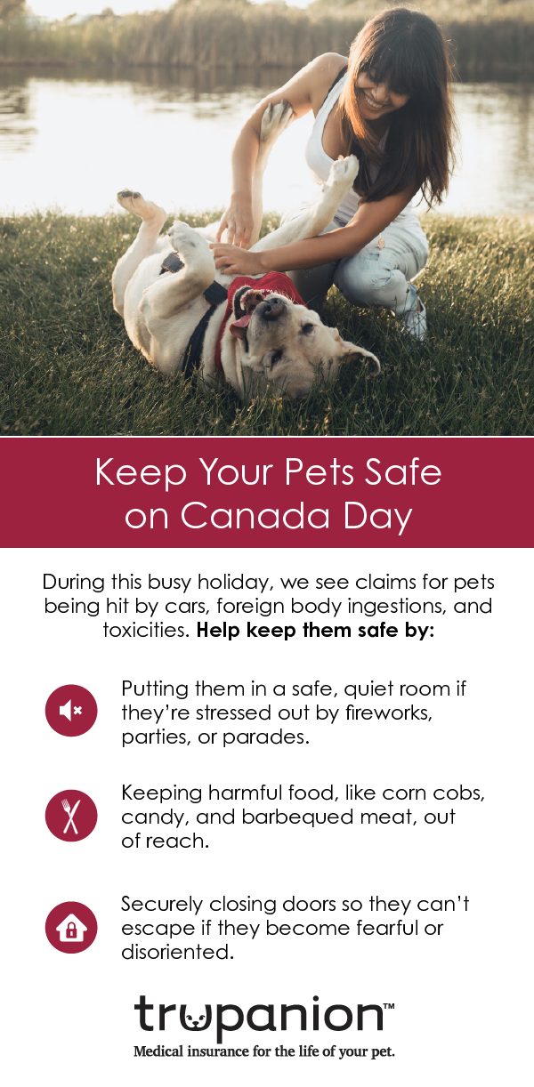 While You Are Preparing For Canada Day Make Sure Your Pet Has The