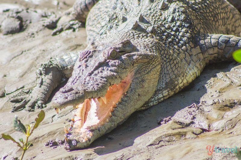 Croc Safari in the Whitsunday Islands - Queensland, Australia