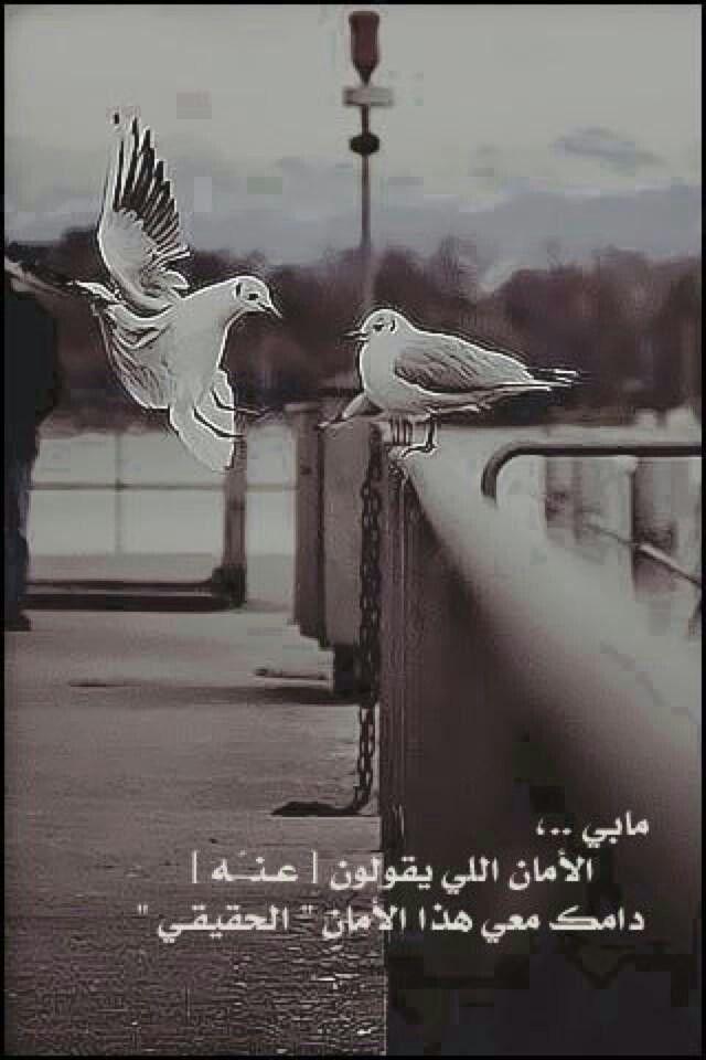 دامك معي م True Words Photo Life