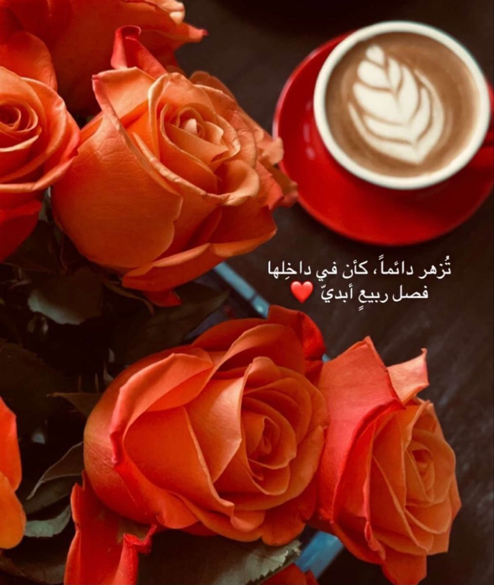 Pin By H On خواطر Words Just Words In 2021 Flowers Rose Plants