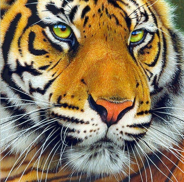 Pin on Lion, Leopard, Panther, Jaguar, Cheetah, Tiger