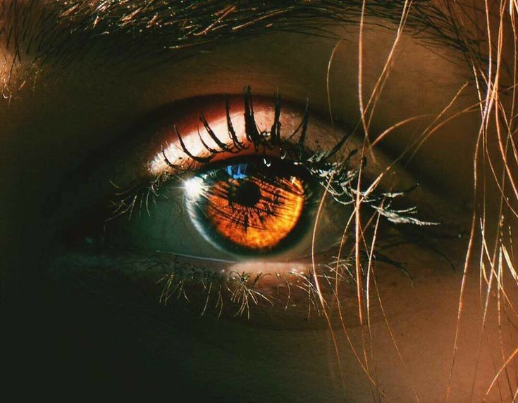 The World Has Divided Into Two Humans And Werewolves Vampires Are Werewolf Werewolf Amreading Brown Eyes Aesthetic Eye Photography Beautiful Eyes Color