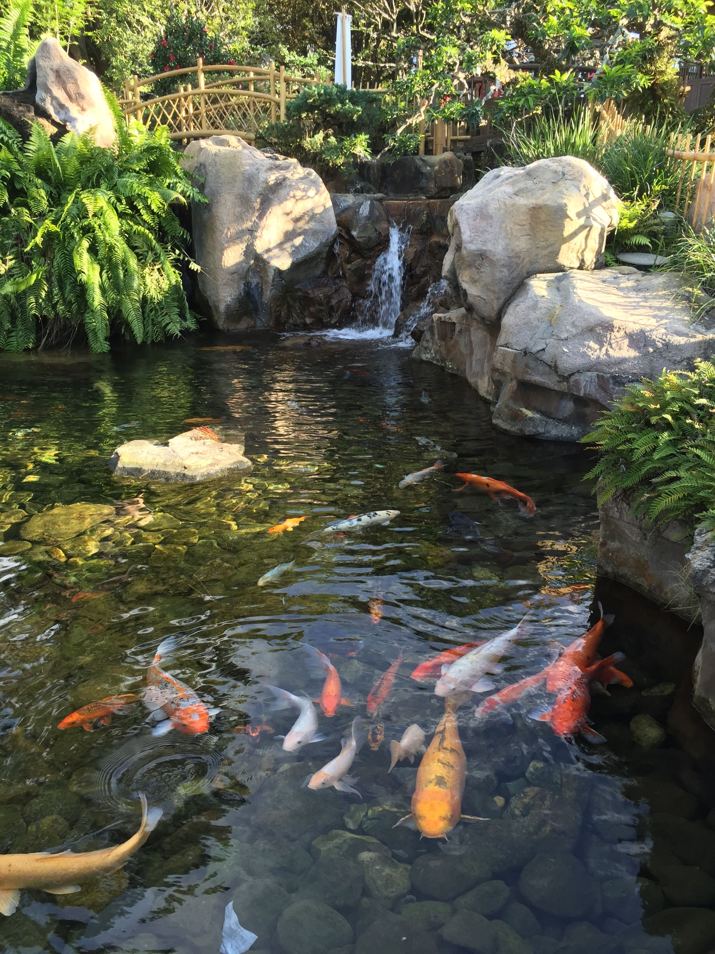 koi pond miniature japan disney world epcot travel