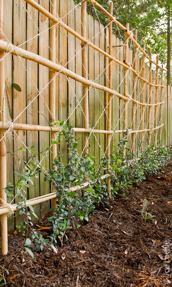 Confederate Jasmine Trellis Bamboo Trellis Garden