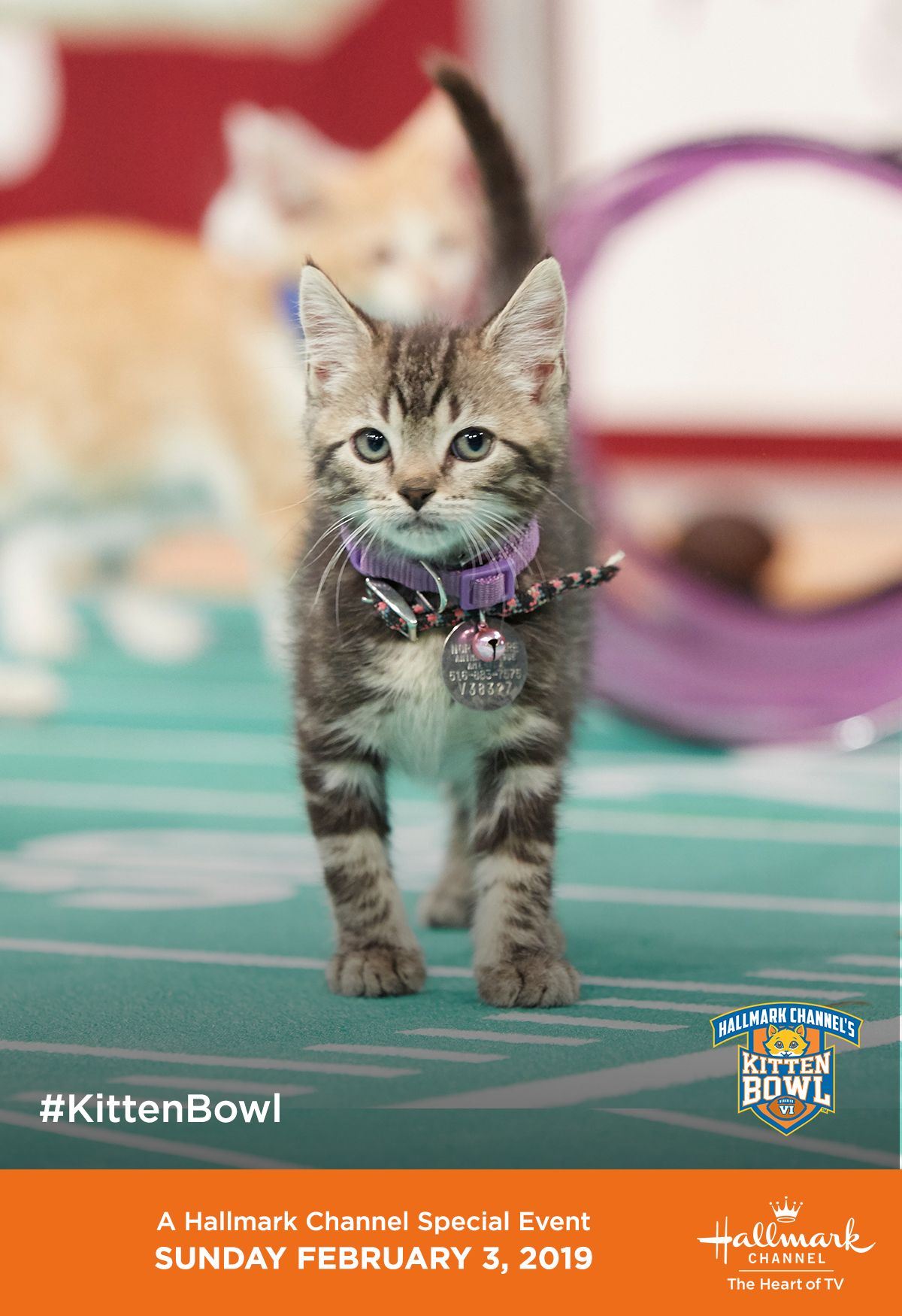 The North Shore Bengals Are Ready For Kitten Bowl Vi Catch The Action On February 3 Only On Hallmark Channel Kitten Bowls Hallmark Channel Kittens Cutest