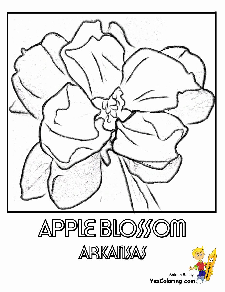 Military Coloring Sheets Free Luxury Magnificent States Flower