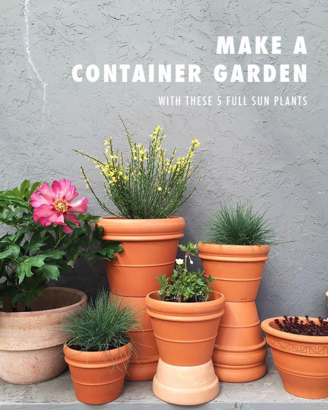 Make a container garden Ve ables GardenVe able GardeningFlower GardeningVeggiesContainer PlantsContainer GardeningFull Sun