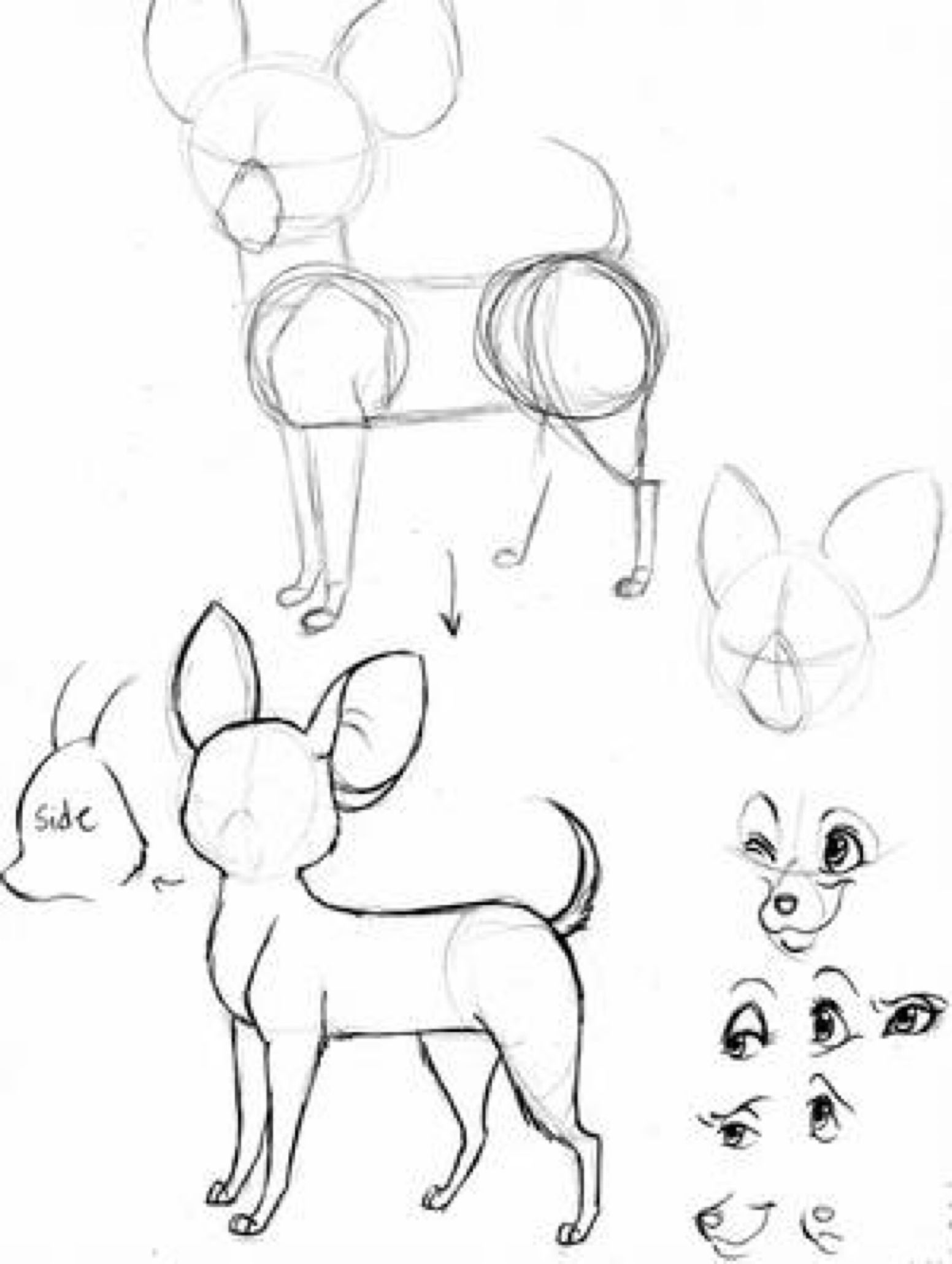 Chihuahua Tutorial By Foxsnout45 On Deviantart Chihuahua Art Chihuahua Drawing Animal Drawings
