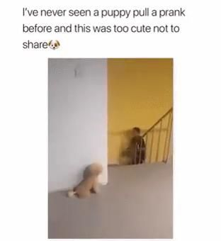 Photo of Cute Puppy pulls prank on his owner. SO CUTE xD