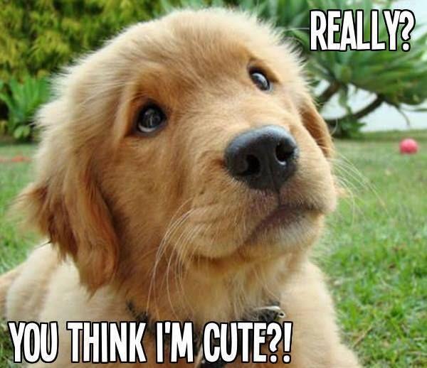 Do you think I am cute?
