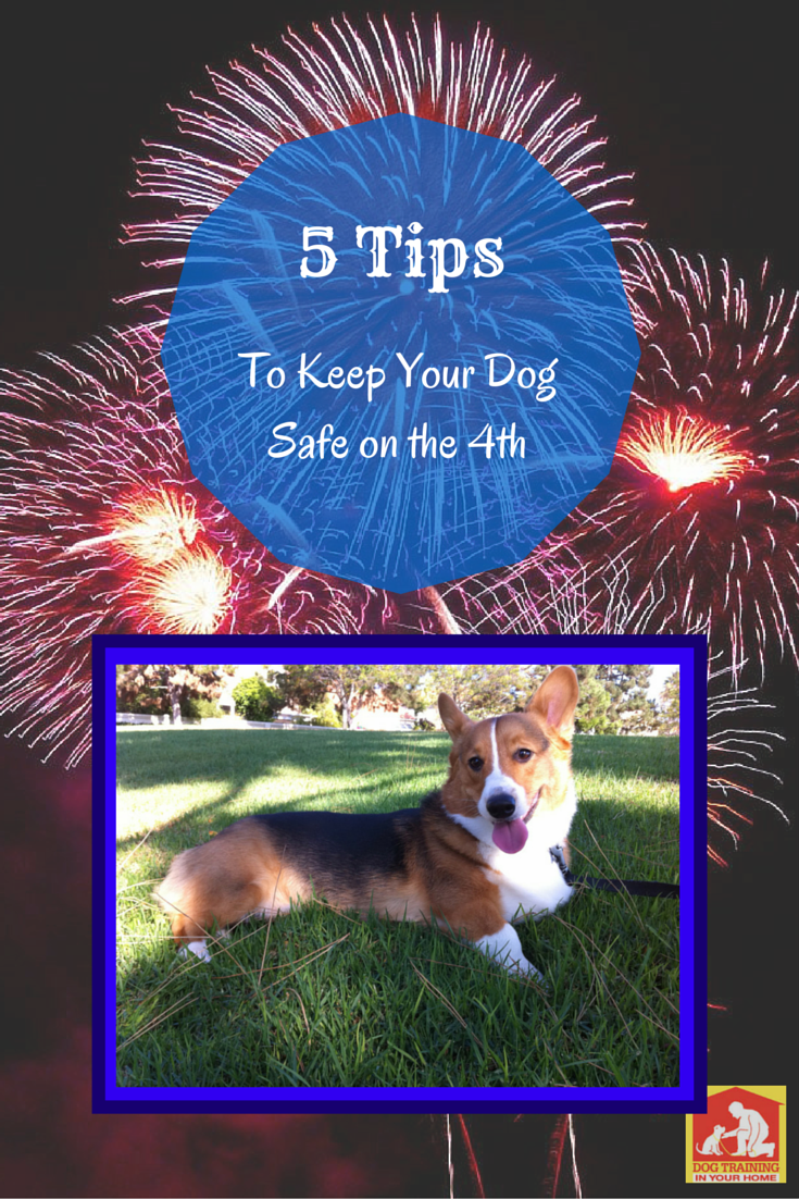 5 Tips to keep your dog safe on the 4th of July #dogs #4thofJuly http://dog-training-columbia.com/tips-for-the-4th-of-july