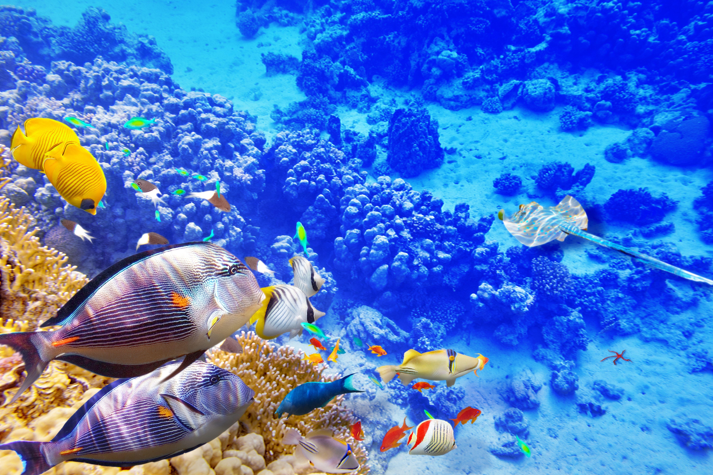 высоту растения картинки море с рыбами могут быть подобраны