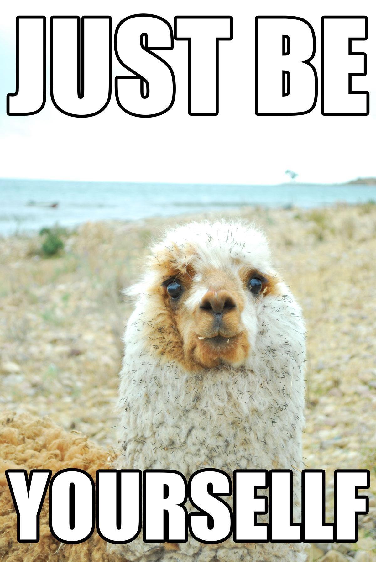15 Llamas Showing You How To Win At Llife Animals Llama Llama Drama