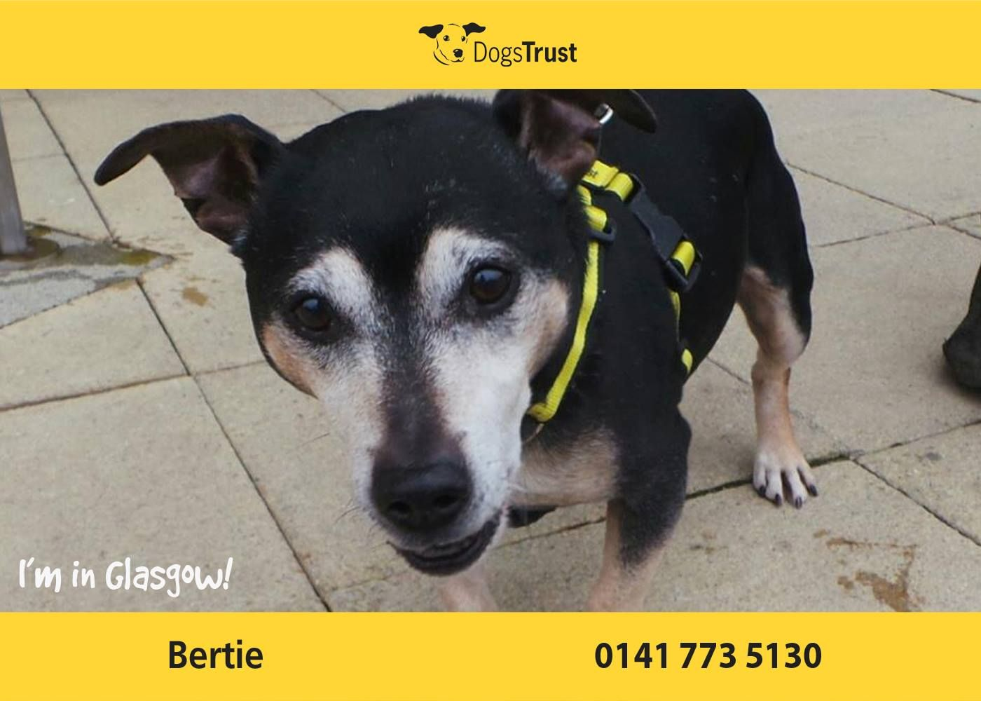 Bertie at Dogs Trust Glasgow is a handsome chap who loves