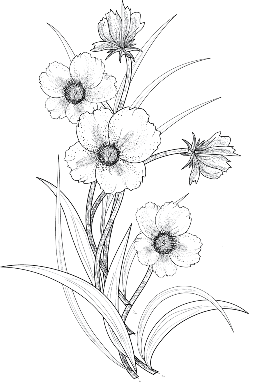 flowers 3 png by roula33 on deviantART Flower line