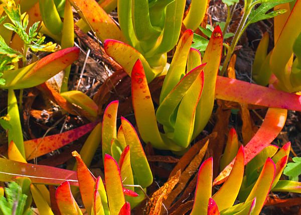 Tropical Reds- beautiful tropical leaves with brillant colors.