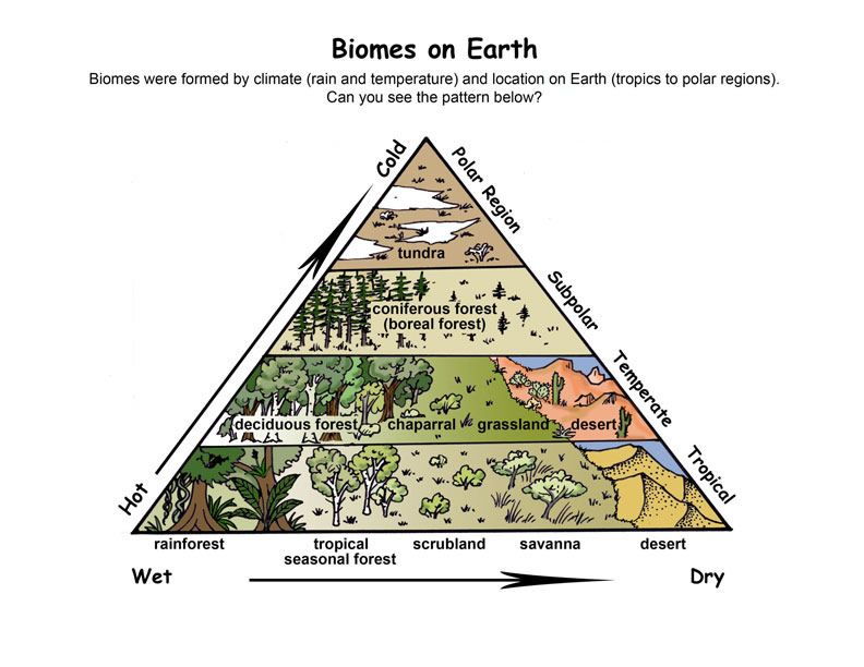 34++ Biomes of north america worksheet answers For Free