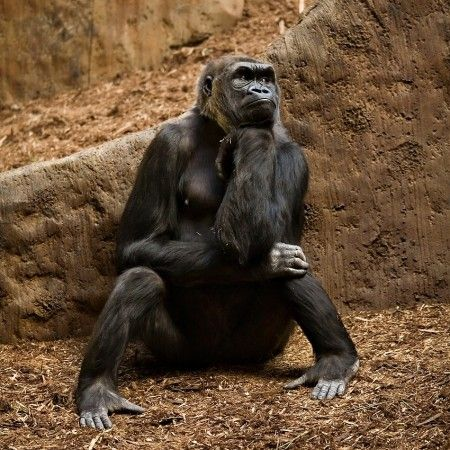 The Thinker by Jonathan Eger