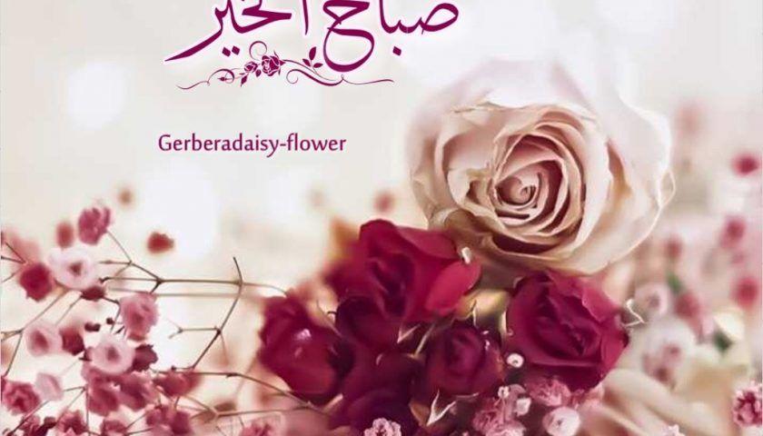 دعاء صباح الخير للأصدقاء In 2020 Flowers Rose Plants