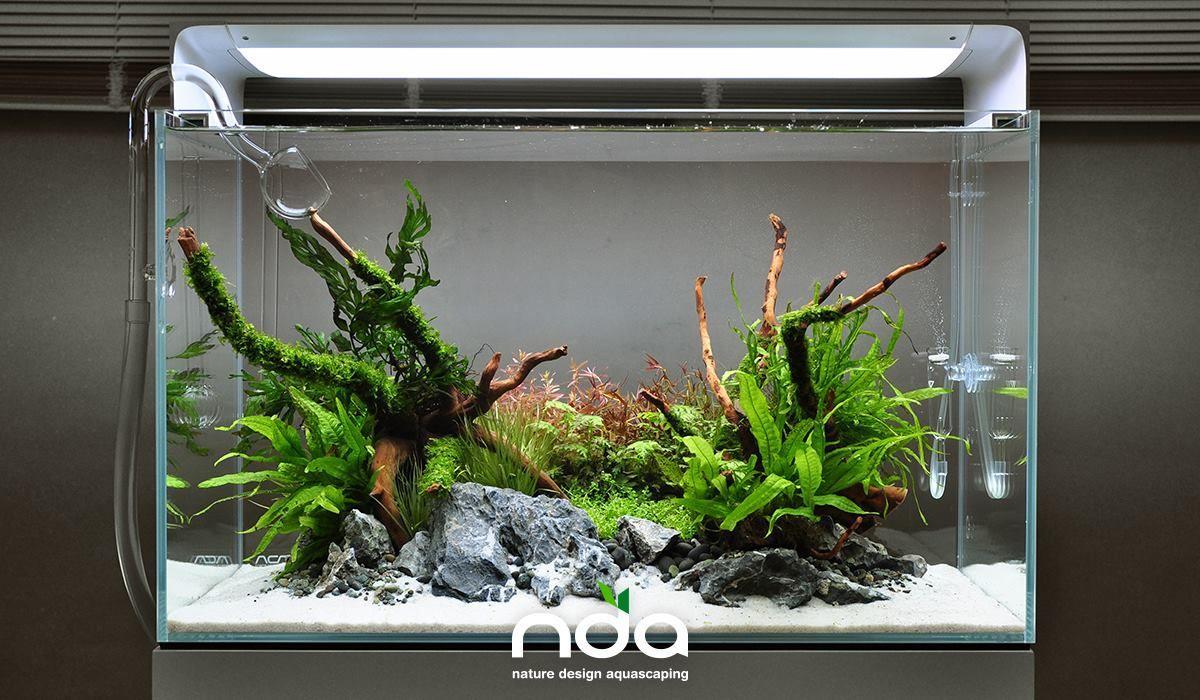 Favourites Simple Scape By Natura Design Aquascaping More Pictures Of The Set Akvariumnaya Rybka Akvarium I Akvadizajn