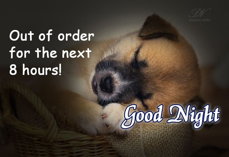 Out Of Order For The Next 8 Hours #goodnight #funny #greetingcards #cards  #onlinecards | Good night funny, Good night wishes, Nighty night