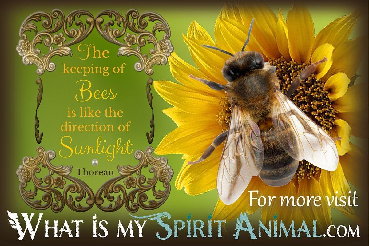 Bee Quotes: Bedroom (Kinda Became Hufflepuff
