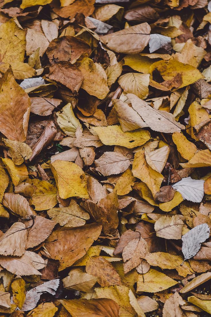 How to Turn Fallen Leaves into Gardener\'s Gold | Pinterest | Potting ...