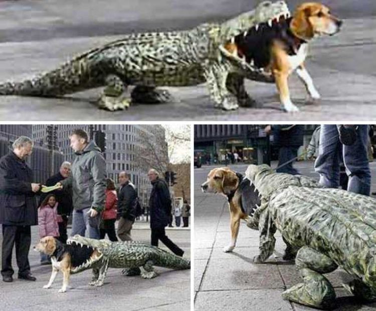 6 Alligator Eating Dog Costume Top 10 Hilarious Dog Costumes
