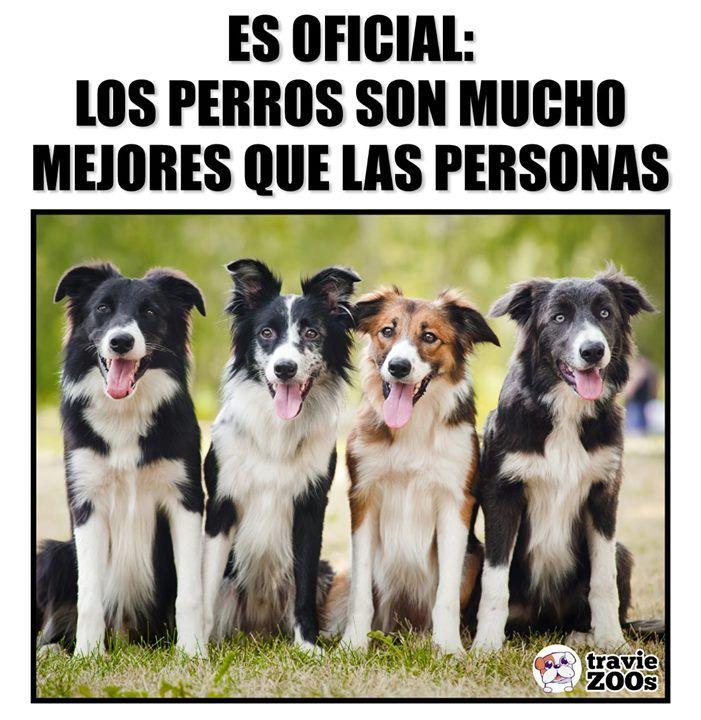 Al Menos Mejores Que Las Personas Que Conozco Perros Frases Memes Perros Perros Mascotas