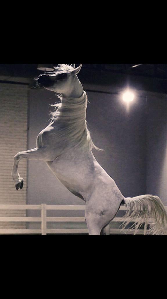 العنود بنت فيصل On Twitter Horses Animals