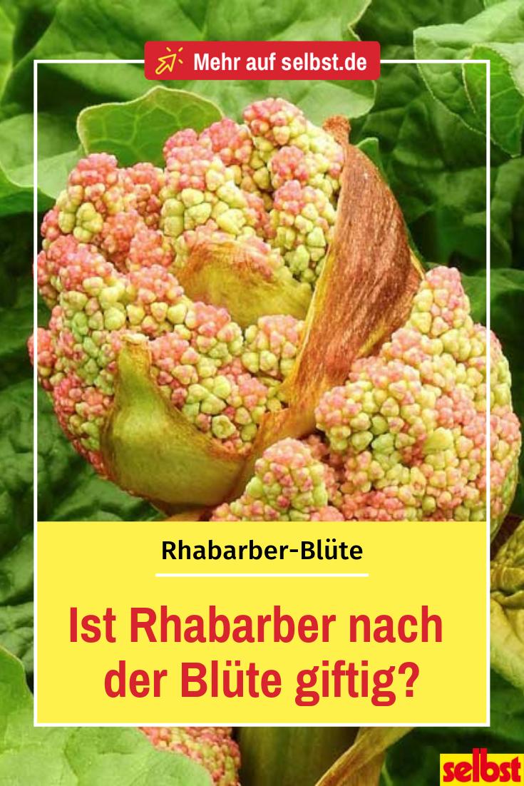 Außergewöhnlich Rhabarber blüht | Gemüsebeet | Rhabarber blüht, Gemüsebeet und Gemüse &GF_91