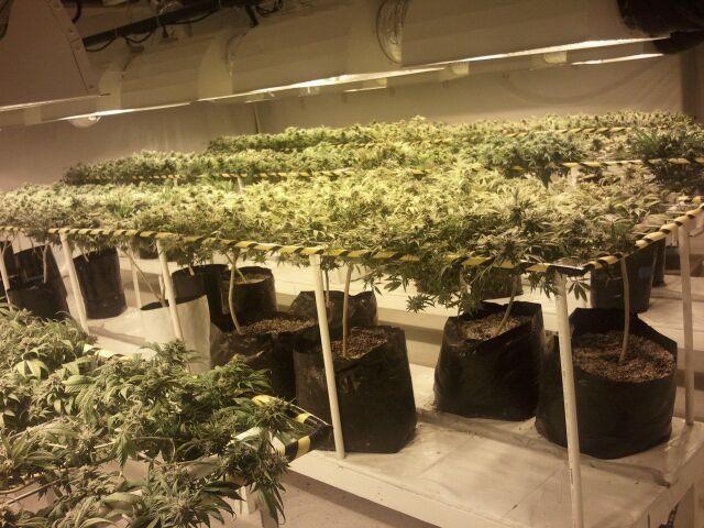 Setting up a cannabis grow room marijuana grow room build - Commercial grow room design plans ...