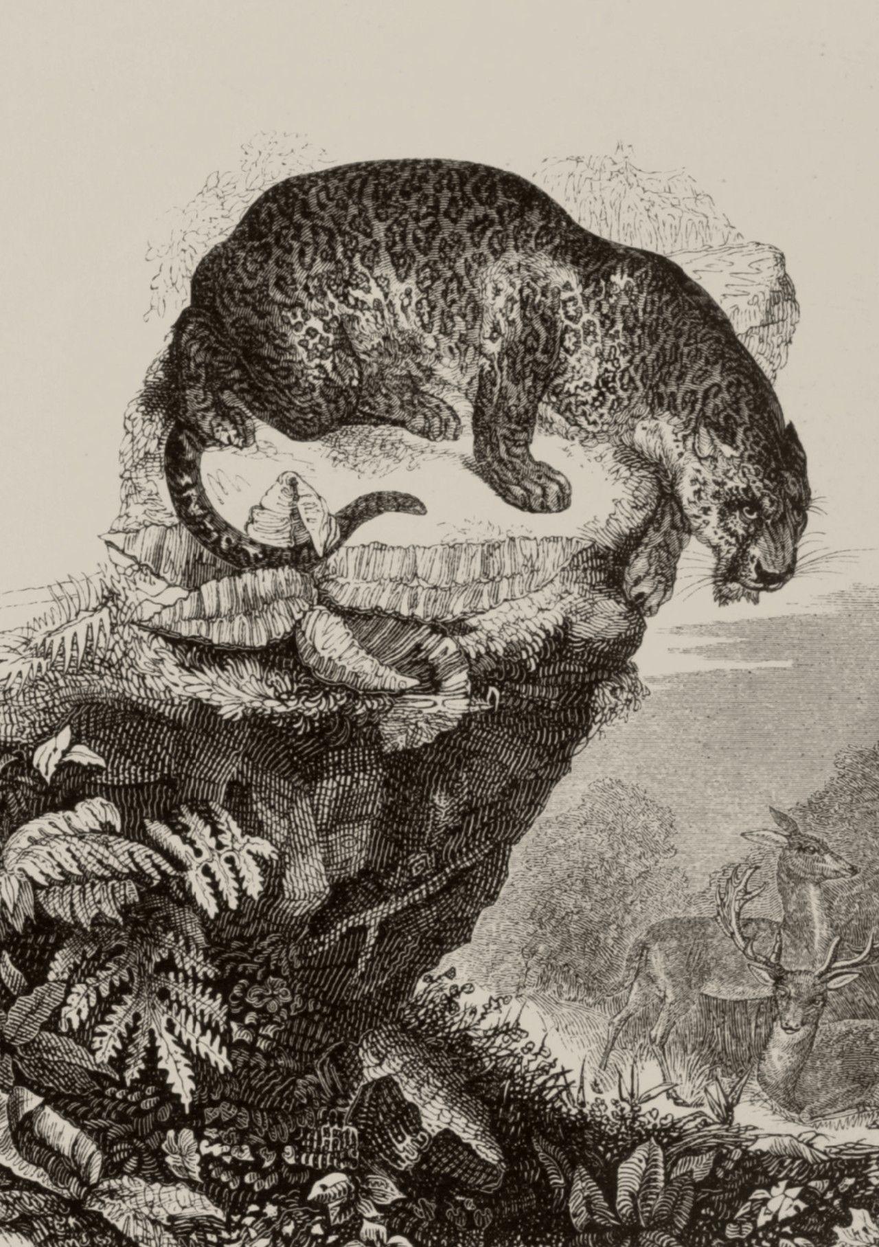 Le Jardin des plantes : description complète, historique ...