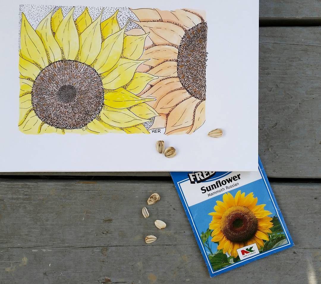 Sunflower Watercolor . . . #sunflower #stippling #watercolor #favehandmade  #stationery #whimsical #decor #homedecor #wallcandy #beachdecor #craftsposure #makersvillage #themakershaus #thhmd #makersbiz #makersgottamake #watercolorforsale #illustration #watercolour #etsy #etsyshop #handmade #etsyseller #notecard #handmadehq #handmadehollow #artist #office #boho