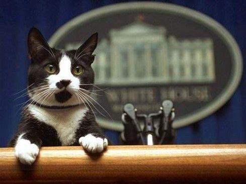 Socks, el gato presidencial - Página Jimdo de pett