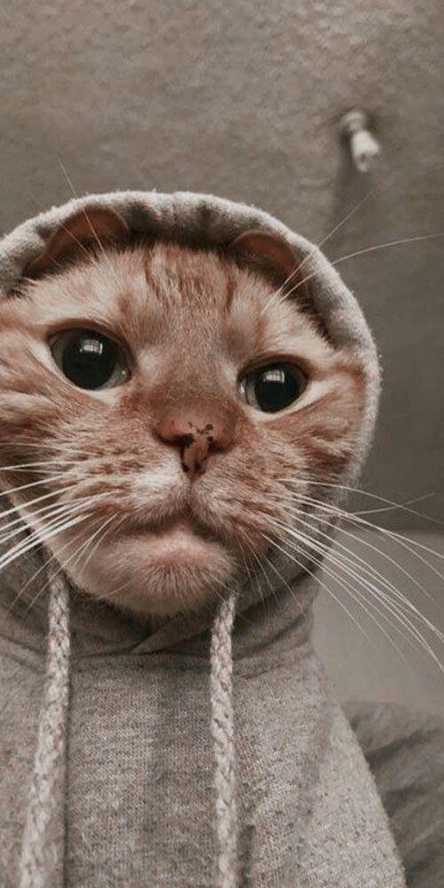Pin Oleh Duaty Agustin Di Kolase Gambar Hewan Lucu Kucing