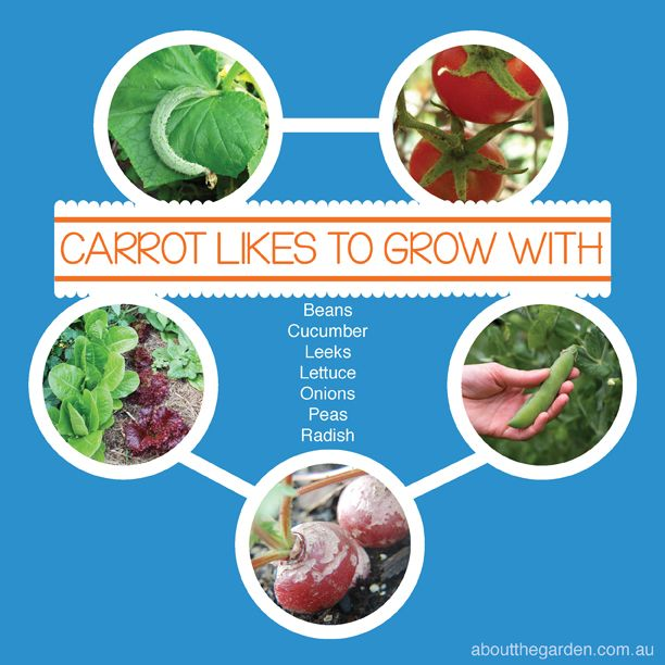 Companion Vegetable Garden Planting Helps Fight Disease 400 x 300