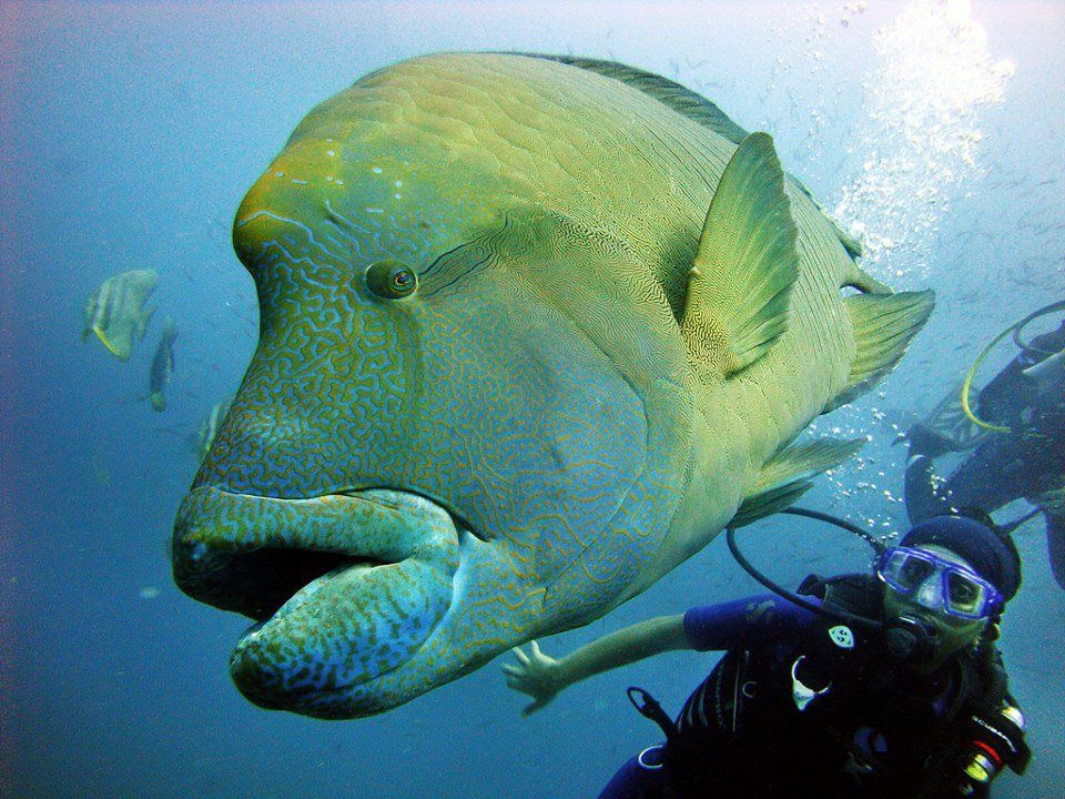 Maldives sea life maldives islands pinterest animal for What saltwater fish are in season now