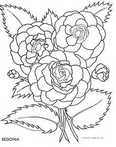 Begonia Colouring Pages Sketch Template Coloring Pages Flower Drawing Floral Drawing
